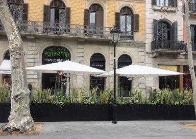 conillas-jardineria-diseno-terraza-y-decoracion-floral-restaurante-bodega-torres-barcelona-11