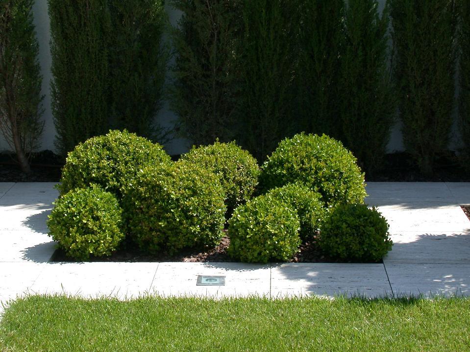 Proyecto y dise o paisaj stico de jard n con piscina en for Servicios de jardineria y paisajismo