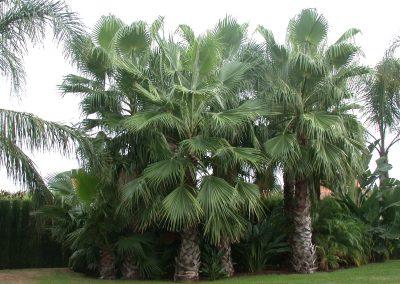 conillas-paisajismo-y-jardineria-diseno-jardin-y-contruccion-piscina-y-pagoda-16