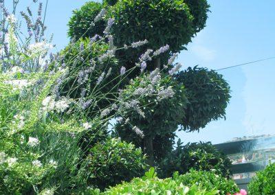 conillas-paisajismo-y-jardineria-diseno-terraza-barcelona-mobilario-vegetacion-07