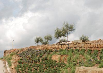conillas-paisajismo-y-jardineria-estudio-del-espacio-diseno-paisajistico-y-ejecucion-proyecto-paisajistico-era-04