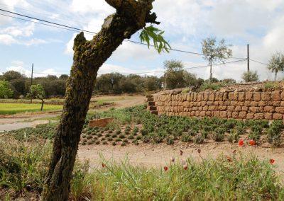 conillas-paisajismo-y-jardineria-estudio-del-espacio-diseno-paisajistico-y-ejecucion-proyecto-paisajistico-era-06