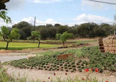 conillas-paisajismo-y-jardineria-estudio-del-espacio-diseno-paisajistico-y-ejecucion-proyecto-paisajistico-era-07