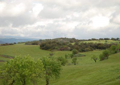 conillas-paisajismo-y-jardineria-estudio-del-espacio-diseno-paisajistico-y-ejecucion-proyecto-paisajistico-era-15