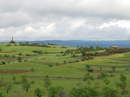 Proyecto paisajístico de una era en La Segarra