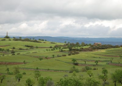 conillas-paisajismo-y-jardineria-estudio-del-espacio-diseno-paisajistico-y-ejecucion-proyecto-paisajistico-era-17