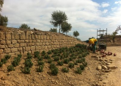 conillas-paisajismo-y-jardineria-estudio-del-espacio-diseno-paisajistico-y-ejecucion-proyecto-paisajistico-era-20