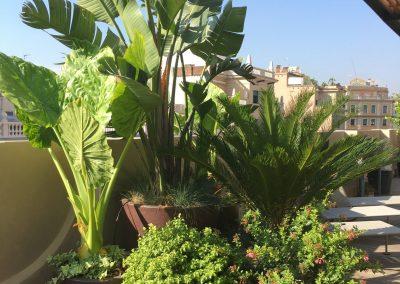 12-conillas-paisajismo-y-jardineria-proyecto-terraza-en-paseo-de-gracia