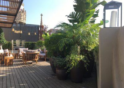 13-conillas-paisajismo-y-jardineria-proyecto-terraza-en-paseo-de-gracia