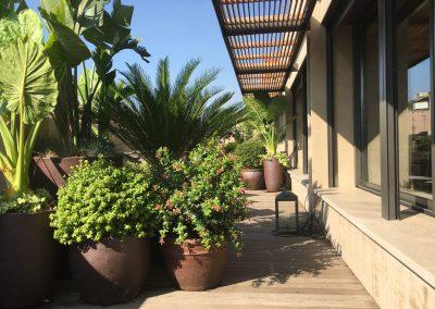 30-conillas-paisajismo-y-jardineria-proyecto-terraza-en-paseo-de-gracia