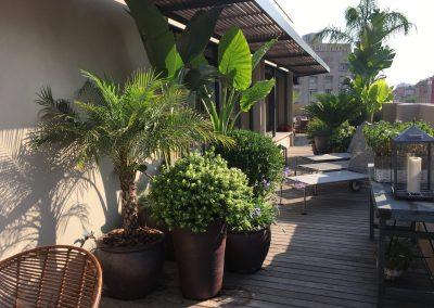 4-conillas-paisajismo-y-jardineria-proyecto-terraza-en-paseo-de-gracia