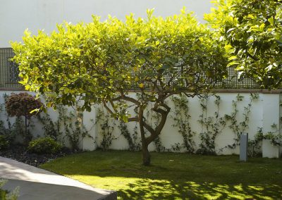 Projecte de remodelació d'un jardí a Pineda de Mar