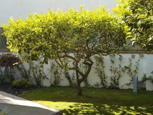 Proyecto de remodelación de un jardín en Pineda de Mar