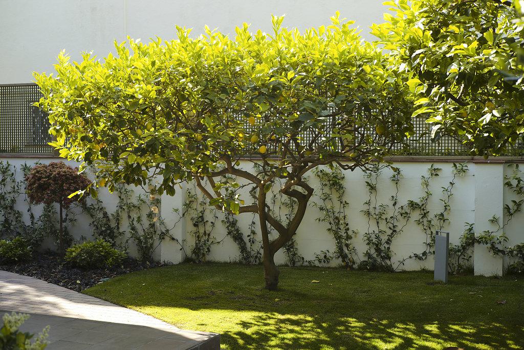 Paisajismo conillas for Proyecto jardineria