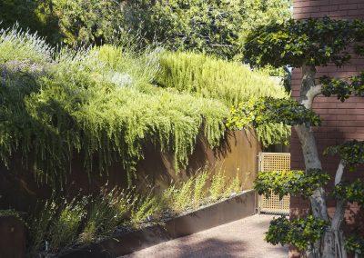 conillas-jardineria-y-paisajismo-proyecto-de-paisajismo-de-una-propiedad-privada-en-Sant-Gervasi-16