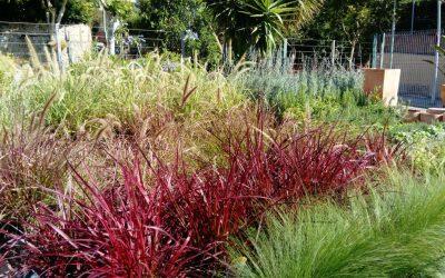 Gramínies ornamentals, moviment i color al teu jardí