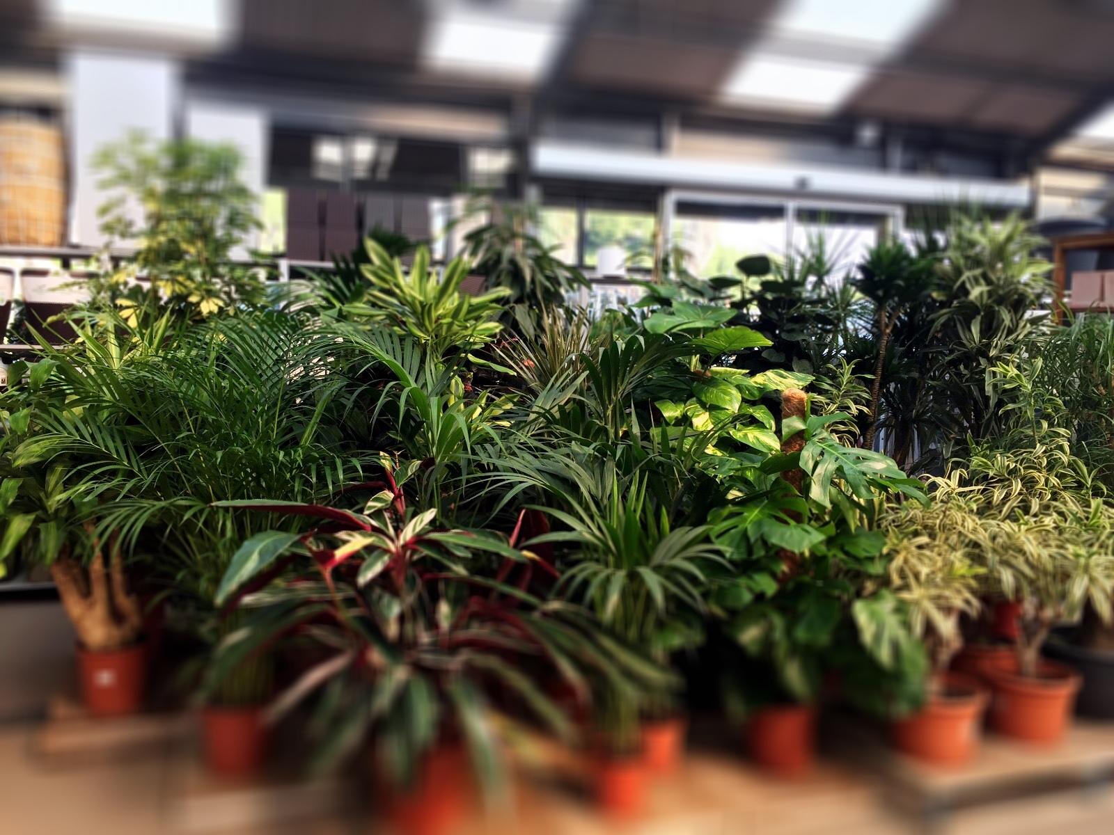 Conillas jardineria y paisajismo plantas hoja grande 2 for Plantas paisajismo