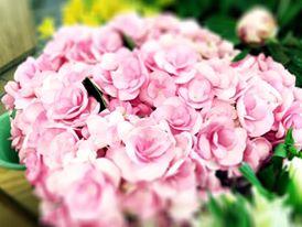 Digue-li t'estimo amb Flors